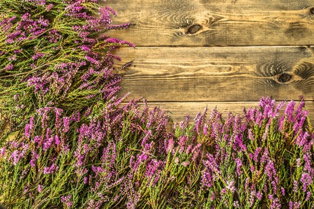 Heather flowers on wooden background, autumn flowers frame Stock Photo