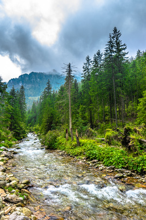 Rapid river in mountains surrounded by evergreen forests and mountain range Stock Photo