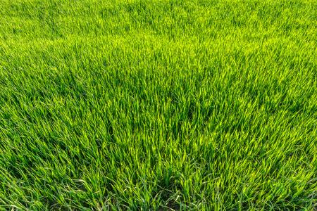 Achtergrond met groene gras, textuur, bovenaanzicht Stockfoto