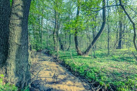 Green forest and river, spring forest landscape Stock Photo