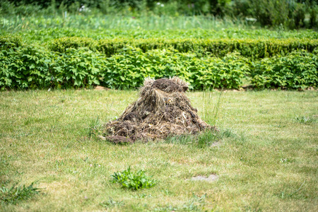 fertilizing: Stack of compost in the garden. Animal dung and straw used for fertilizing land, heap on the grass. Stock Photo