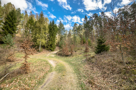 Path in the forest, spring landscape, good weather Stock Photo