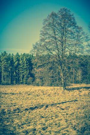 Lonely tree on field, landscape Stock Photo