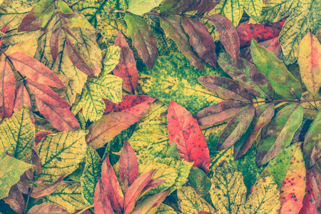 Autumn Wallpaper Leaves In Fall Backgrounds Rustic Style Stock Photo