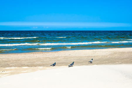 Pigeons on the beach and blue sky, summer vacation travel background