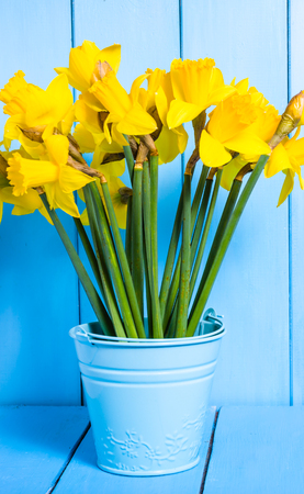 Spring easter background with yellow daffodils bouquet in the bucket