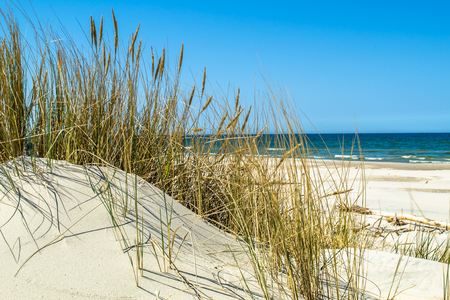 Verlaten zandstrand, landschap met duinen en gras onder de blauwe hemel in de zomer