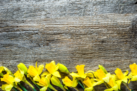 Spring backgrounds, easter card with daffodils on wood Reklamní fotografie