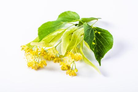 Fresh linden flowers isolated on white background Stock Photo
