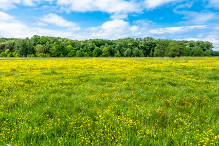Blooming meadow with flowers in spring sunny day and blue sky