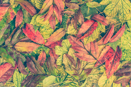 Autumn Wallpaper With Colorful Leaves In Fall As Backgrounds Stock Photo