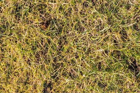 春の新鮮な草の背景