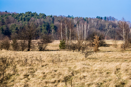 Polish early spring landscape with dry grass and scrub under a clear blue sky Stock Photo