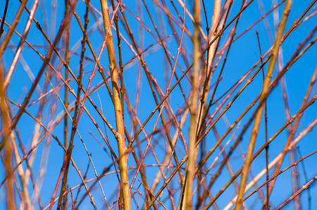 Frühlingszweige auf blauem Himmel Hintergrund Standard-Bild - 74650383