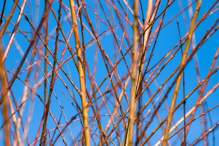 Spring twigs on blue sky background