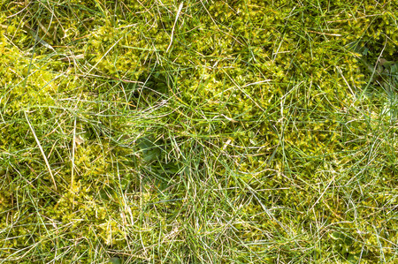 Moss and grass texture, background