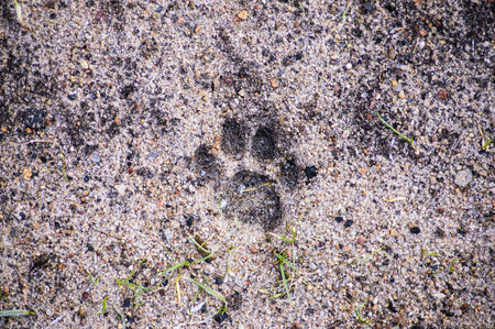 Footprint of the cat paw in the sand