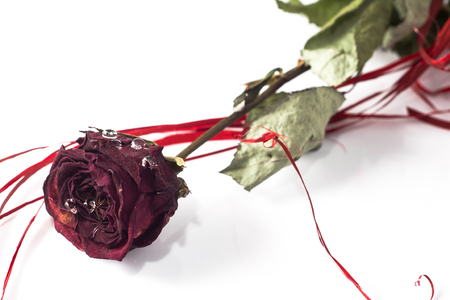Dry red rose isolated on white background, mothers day card