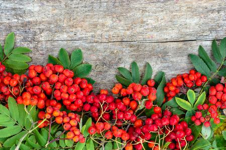 木製の背景、秋のフレーム コピー スペース付きの赤い秋ナナカマド果実 写真素材
