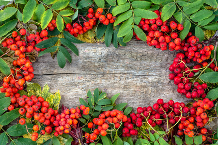 Autumn frame with rowan berries on wooden background, fall wallpaper