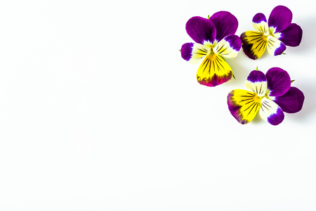 Beautiful flowers violets, floral corner arranged on white background, copy space