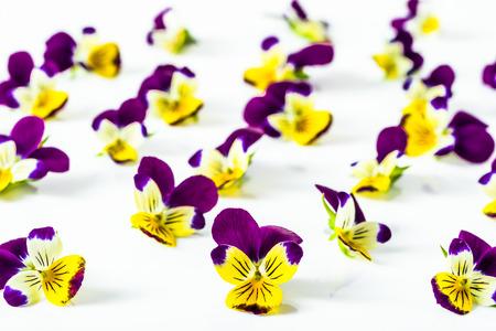 아름 다운 꽃 제비 꽃, 흰색 배경, 선택적 포커스에 배열하는 꽃 패턴