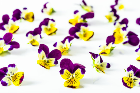 Beautiful flowers violets, floral pattern arranged on white background, selective focus
