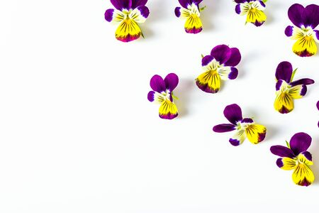 Beautiful flowers violets, floral frame arranged on white background