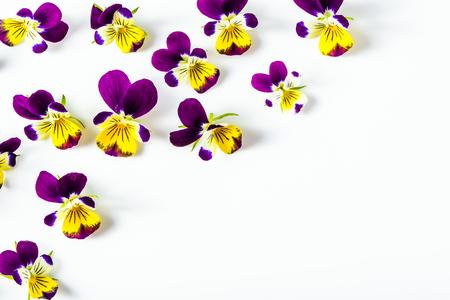 Mooi bloemenkader met viooltjes, bloemenpatroon dat op witte achtergrond wordt geschikt