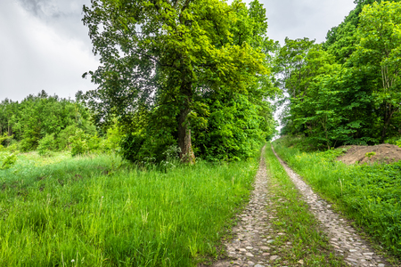 Rural road in the summer countryside scenery of cobblestone path and trees