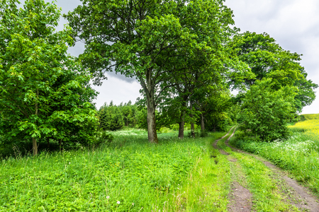 Green summer landscape of road through farmland field and trees with lush foliage Stock Photo