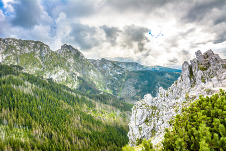 giewont: Panoramic landscape of mountain, peak with rocks and pine forest