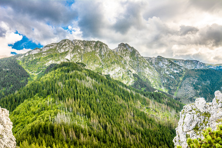 Panoramic landscape of mountain, peak with rocks and evergreen forest