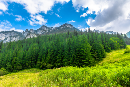 Landscape of mountain valley with pine forest in spring Stock Photo