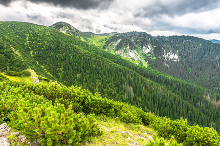 Green mountain forest, landscape Stock Photo