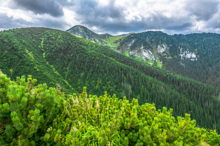 Green mountain landscape, highlands covered pine forest