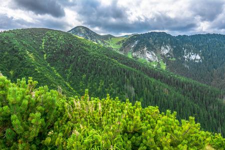 Paisaje de montaña verde, las tierras altas cubrieron el bosque de pinos Foto de archivo - 80641738