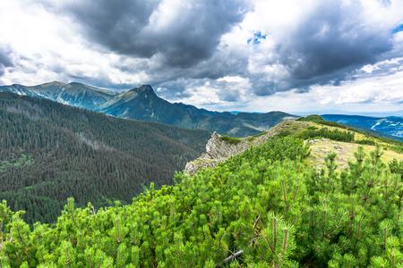 Bosque de pinos en la cresta de la montaña. Montañas de Tatra, paisaje, fondo de viajes de verano Foto de archivo - 80641890