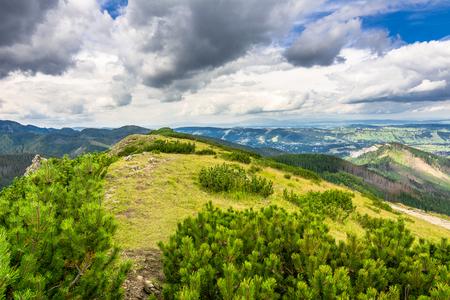 El paisaje del canto de la montaña cubrió el bosque del pino en el verano, concepto treveling Foto de archivo - 80642020