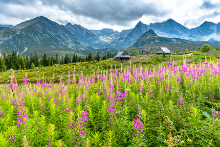 Wild flowers in mountains, countryside scene with mountain hut surrounded wild nature, summer landscape