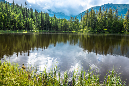 Mountain lake in the forest, Tatra Mountains, National Park in Poland, summer landscape 版權商用圖片