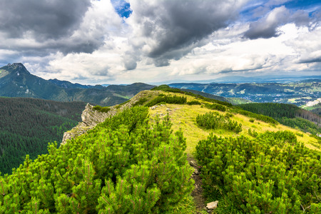 Bosque verde en el canto de la montaña. Montañas de Tatra, paisaje, fondo de viajes de verano Foto de archivo - 80641559