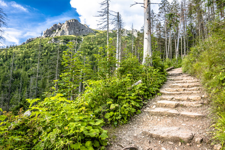 Hiking trail in mountains, landscape, path with rocks leading to the top of mountain