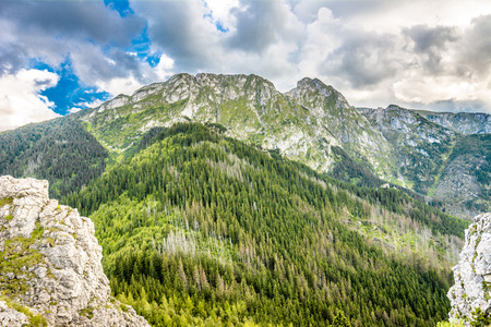 Panorama of mountains, spring landscape, mountain range covered pine forest