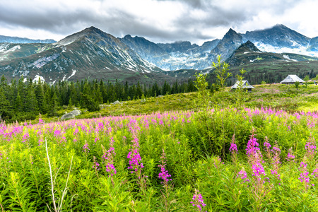 Summer flowers in mountain countryside scenery, field covered wildflowers