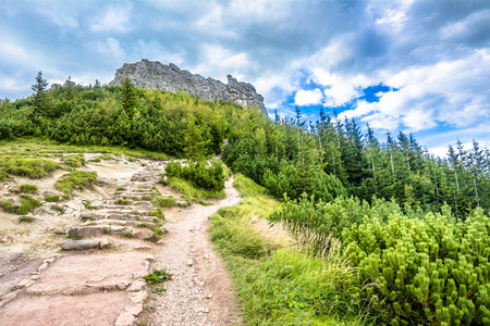 Landscape of mountain hiking trail under rocks of mountains covered pine forest