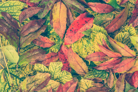 Autumn leaves backgrounds, autumn wallpaper