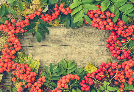 Vintage autumn frame from rowan berry fruits on wooden background, Thanksgiving day concept