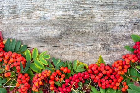 赤いナナカマド フレーム、秋の背景、テキスト スペース
