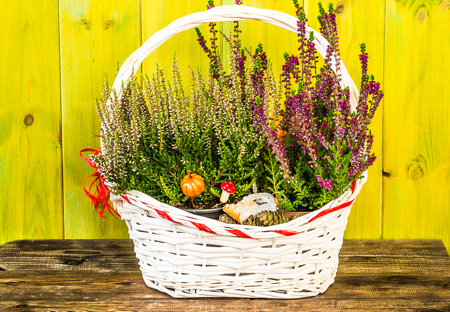 Flower of heather in the basket, autumn flowers background, shabby chic rustic pattern